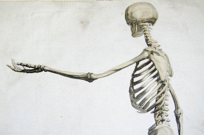 Интересные факты о скелете человека