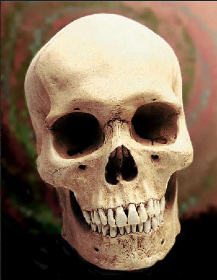 Интересные факты о черепе человека