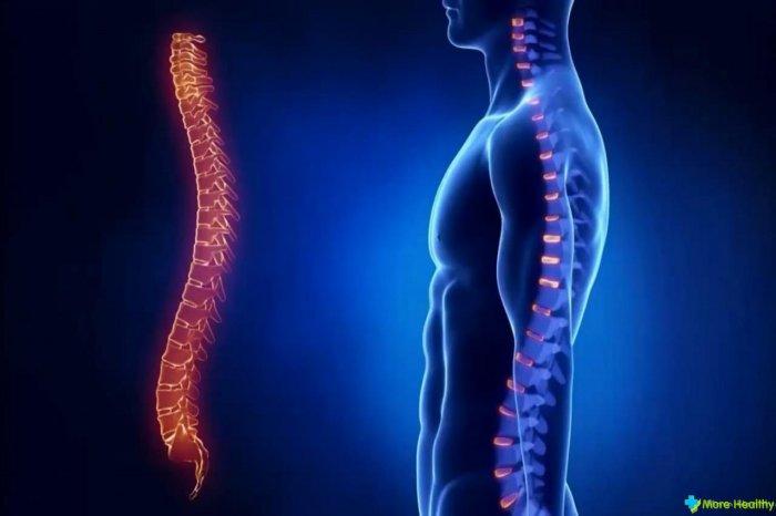 Интересные факты о спинном мозге человека