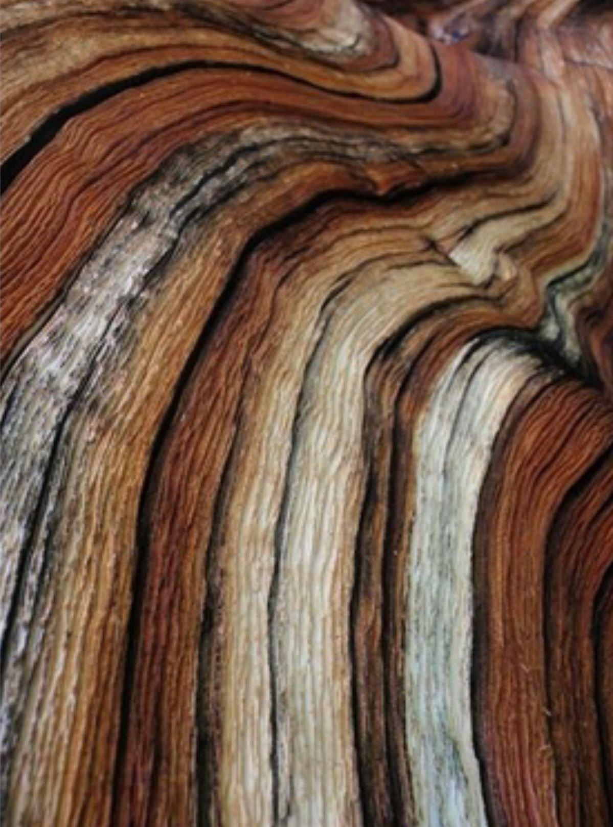 Текстура дорогого дерева