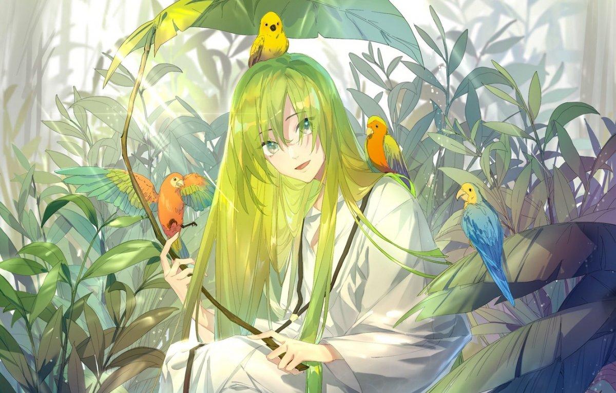 Волнистый попугай аниме