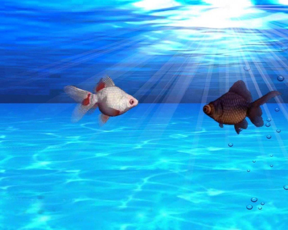 Живая рыба фон