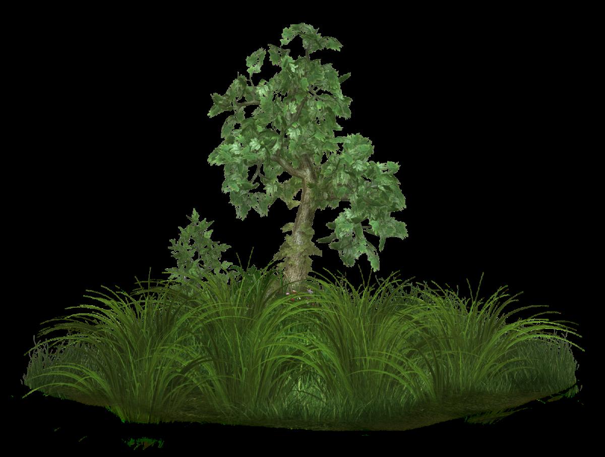 Лес без заднего фона