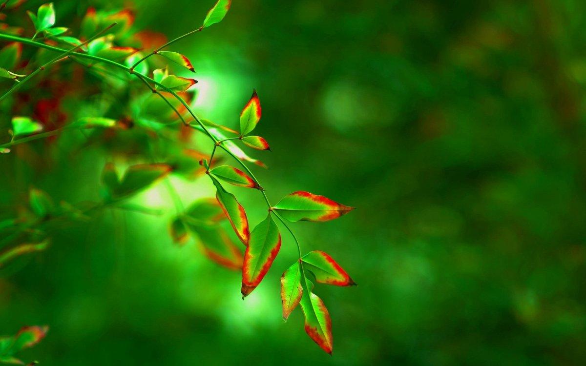 Зеленый фон природа размытый