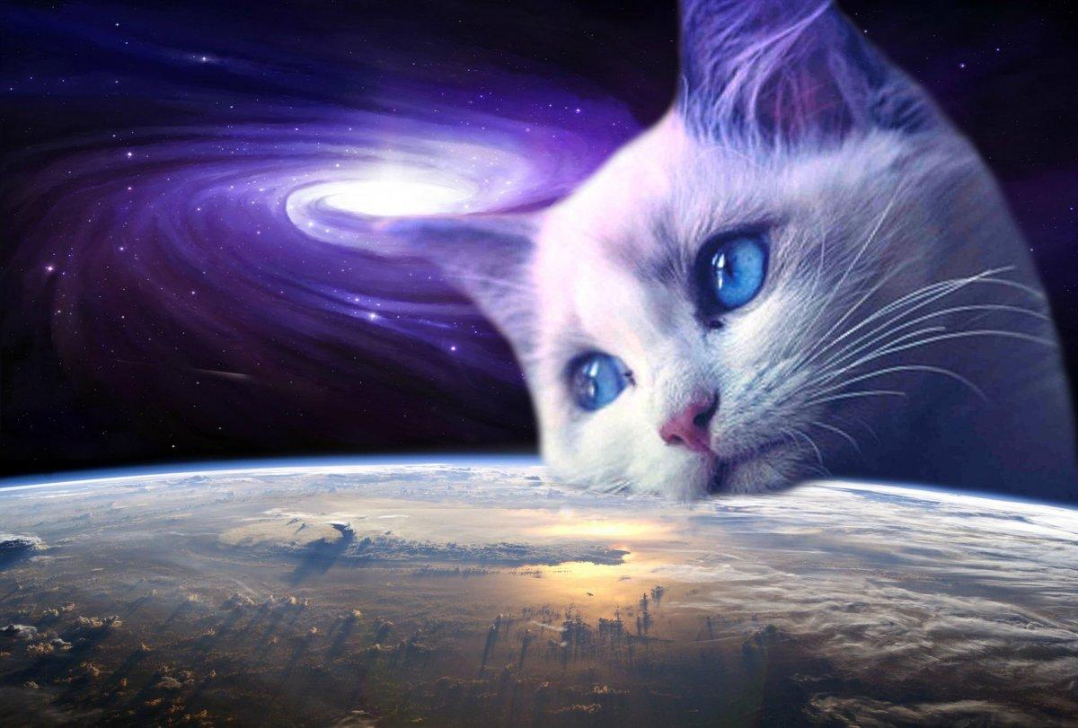 Космический кот арт