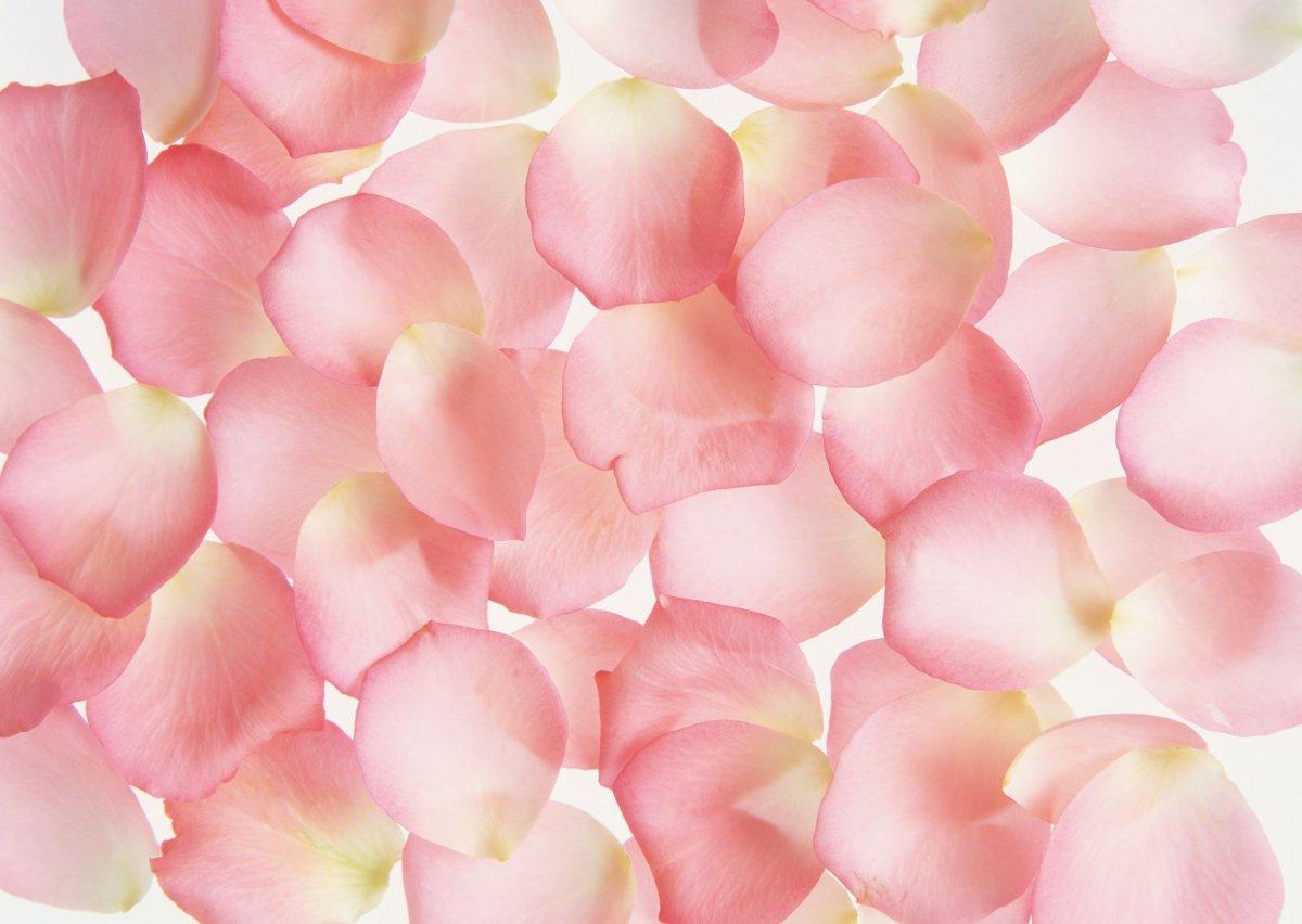 Текстура лепестки цветов