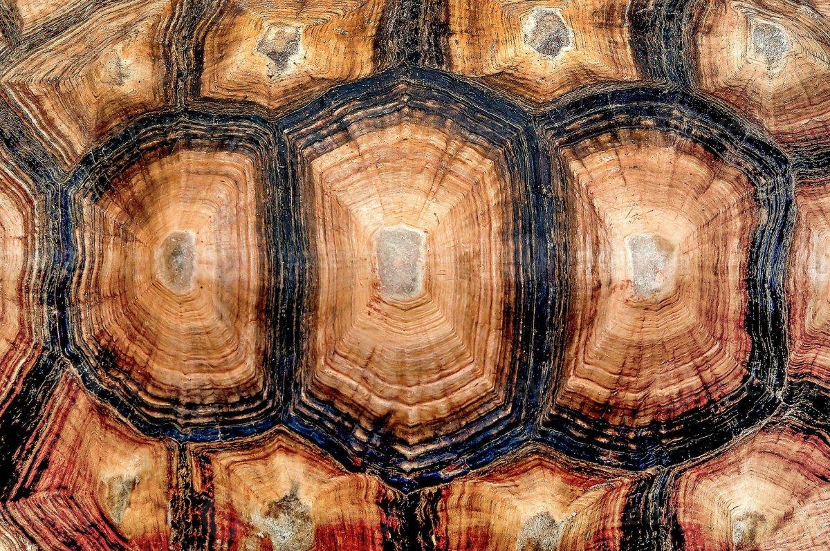 Панцирь черепахи текстура